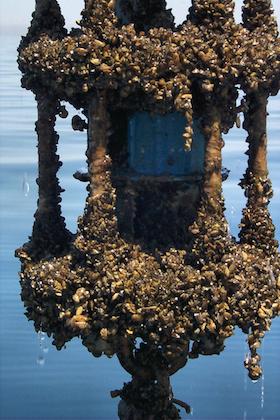 mussels noaa